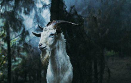 Luz: The Flower Of Evil Trailer & Realease Details Moviehooker Dark Sky Films